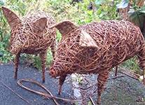 willow_weaving_pig_in_a_day_1426180333.jpg